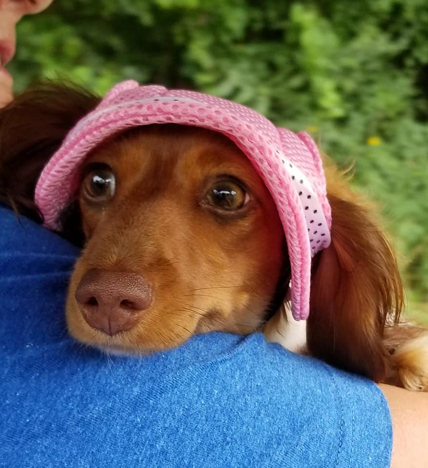 18 Funny Reasons Why You Should Not Own A Dachshund 12