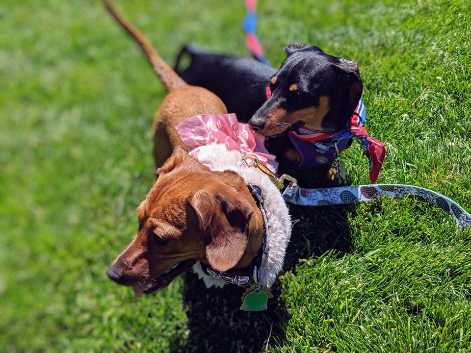 Top Awesome Names For Dachshunds 2