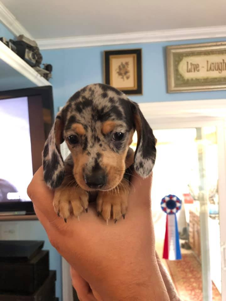 13 Reasons Dachshunds Are The Best Dogs