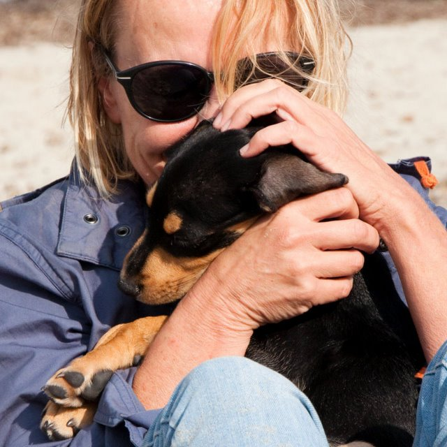 20 Benefits Of Being a Dachshund Owner You Didn't Know 1