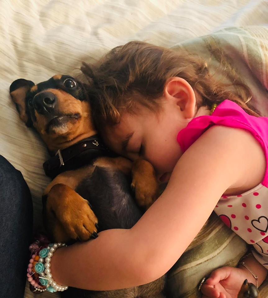 20 Benefits Of Being a Dachshund Owner You Didn't Know 17