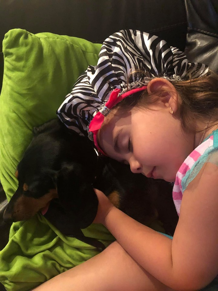 20 Benefits Of Being a Dachshund Owner You Didn't Know 16