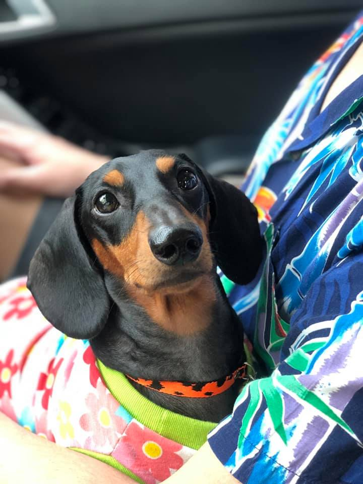 Top Awesome Names For Dachshunds 5