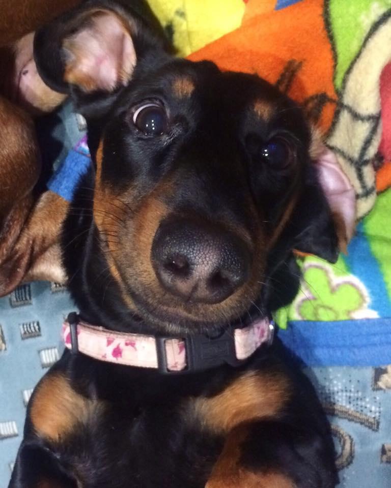 Dachshunds like to take selfies