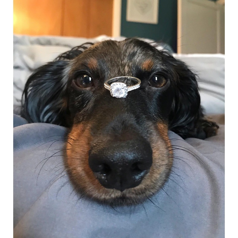 30 Funny Moments Showing That Dachshunds Are The Cutest Dogs 22
