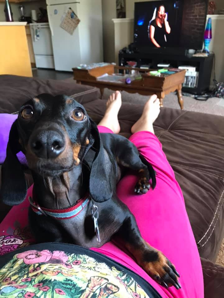 15 Reasons Dachshunds Are The Worst Dogs 4