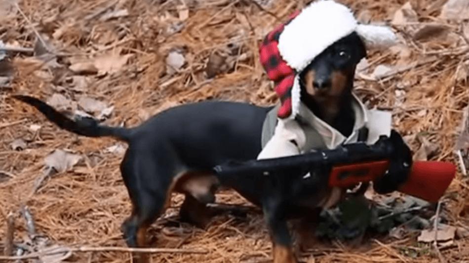 dachshund hunter freeze freeze