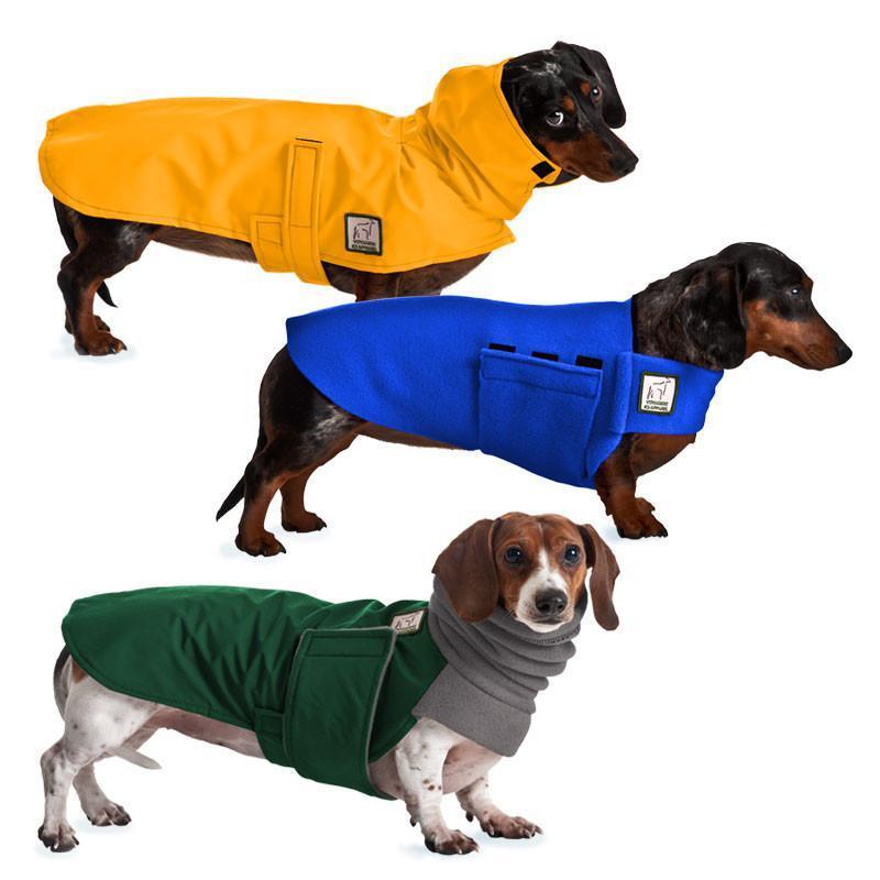 Hello, I am a model I am promoting for dog clothing dachshund