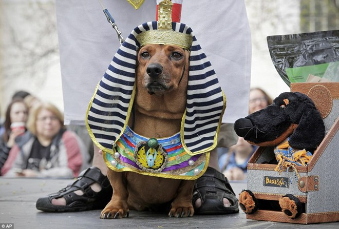 Dachshund Parade Costumes That Are Just Too Cute 1
