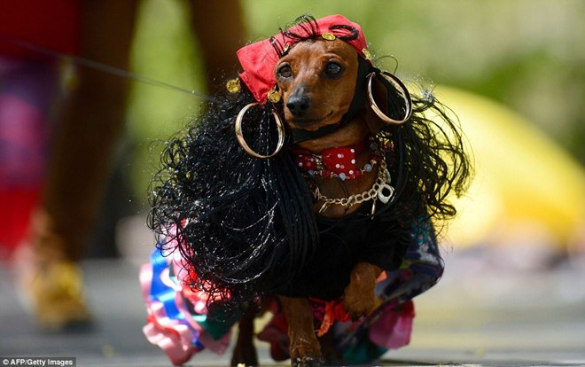 Dachshund Parade Costumes That Are Just Too Cute 3