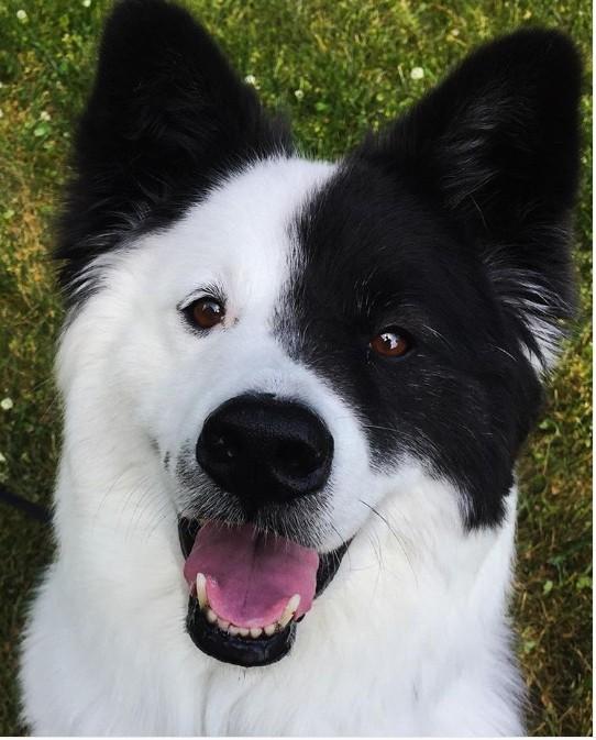 Bonus! A super cute dog. Guess the breeds of his parents.