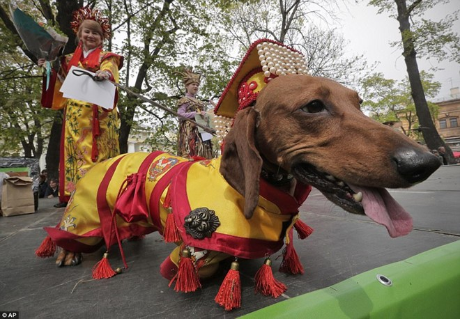 Dachshund Parade Costumes That Are Just Too Cute 6