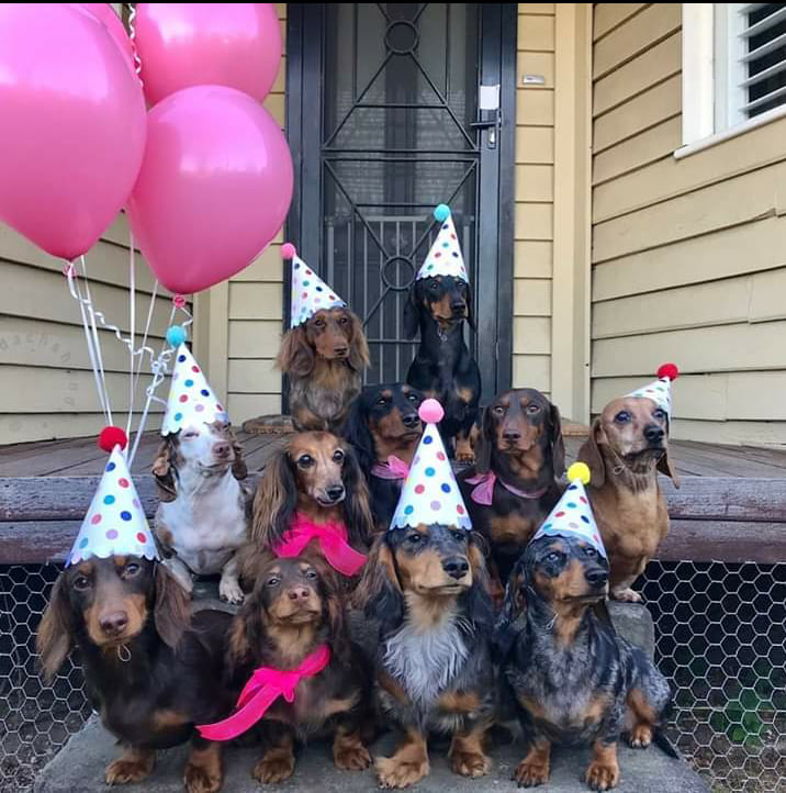 A New Study Finds That Dachshunds Can Help People Increase Longevity 2