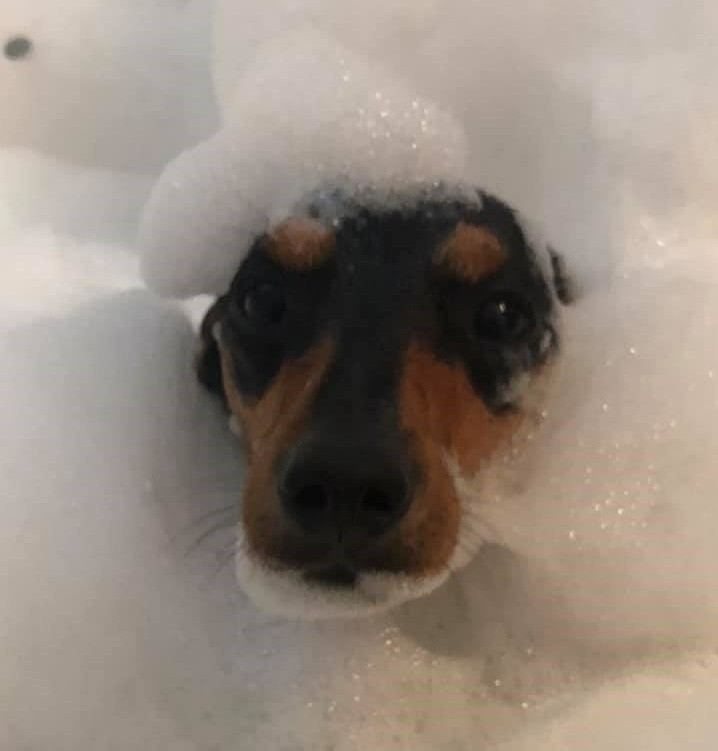 18 Funny Moments Showing That Dachshunds Are The Cutest Dogs 18