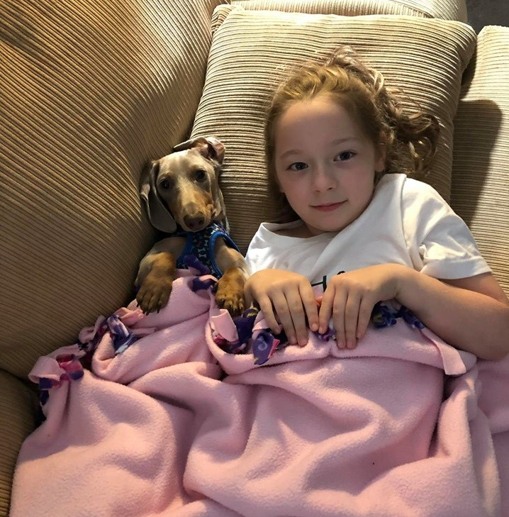 Top 5 Reasons You Should Own A Dachshund In Your House 2