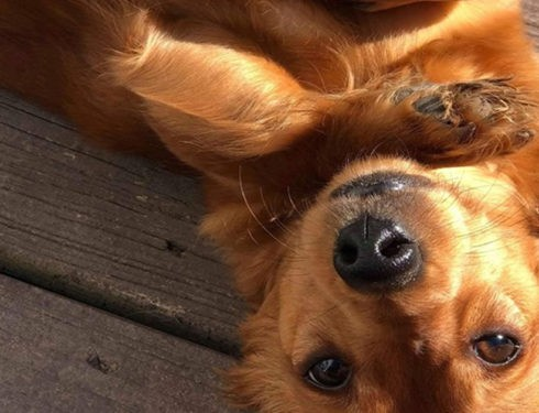 5 Amazing Secret Only Dachshund Owners Understand