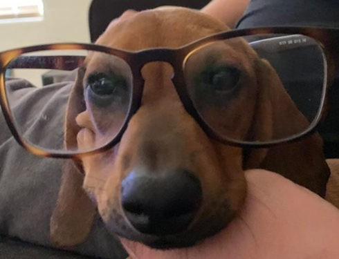 Things Your Dachshunds May Not Like
