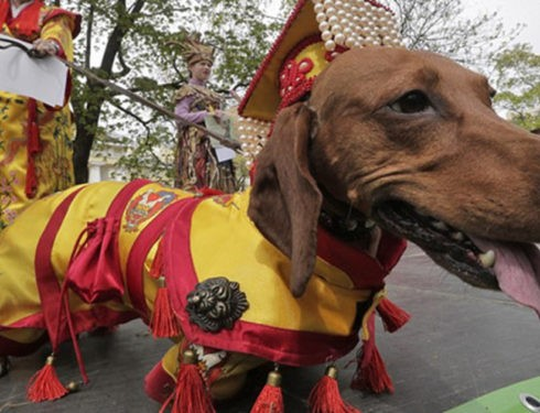 Dachshund Parade Costumes That Are Just Too Cute