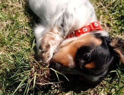 10 Reasons Dachshunds Are The Funniest Dogs