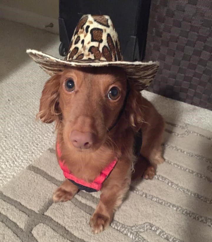 Funny Dachshund Property Laws 6