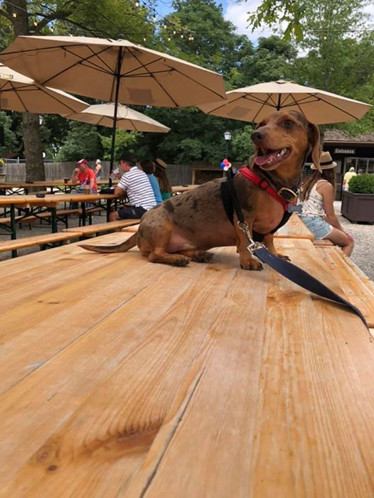 12 Reasons You Should Not Own A Dachshund 10