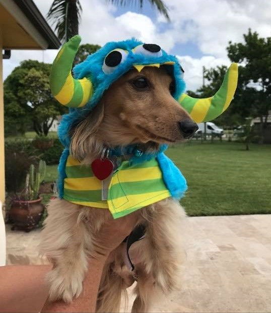 12 Reasons You Should Not Own A Dachshund 9