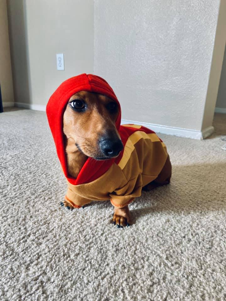 Why Dachshunds Are The Best Dogs 1