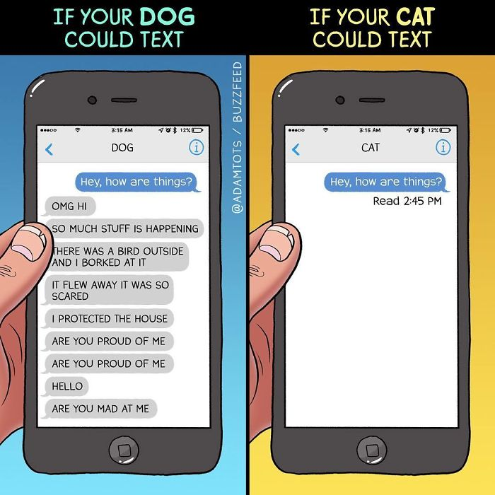 The Difference Between A Dog Person And A Cat Person That Only Insiders Understand 8