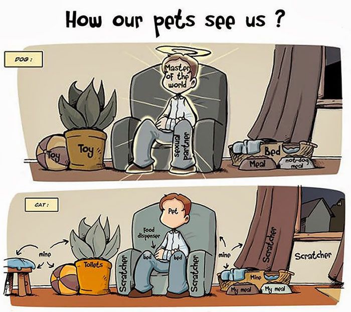 The Difference Between A Dog Person And A Cat Person That Only Insiders Understand 16
