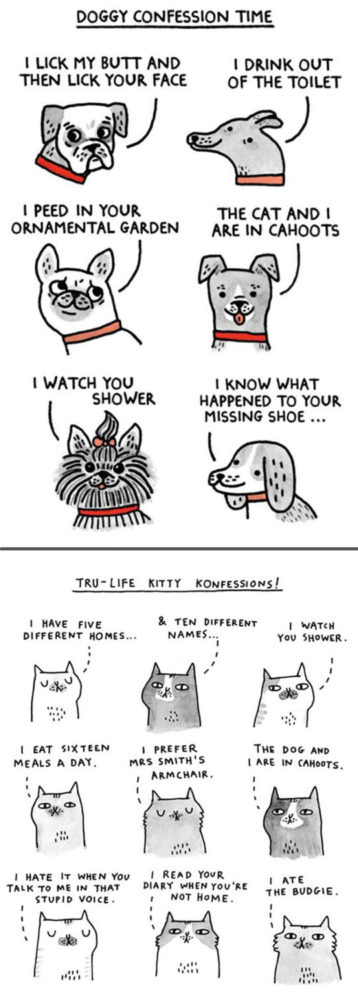 The Difference Between A Dog Person And A Cat Person That Only Insiders Understand 11