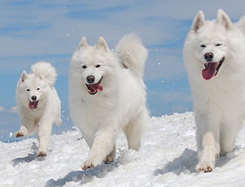 Top The Most Beautiful And Cutest Dogs In The World