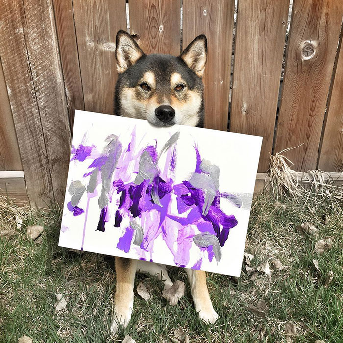 A Shiba Dog Can Paint And Help His Owner Earn $5,000 5