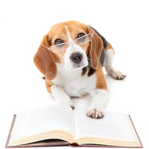 Signs of a smart dog